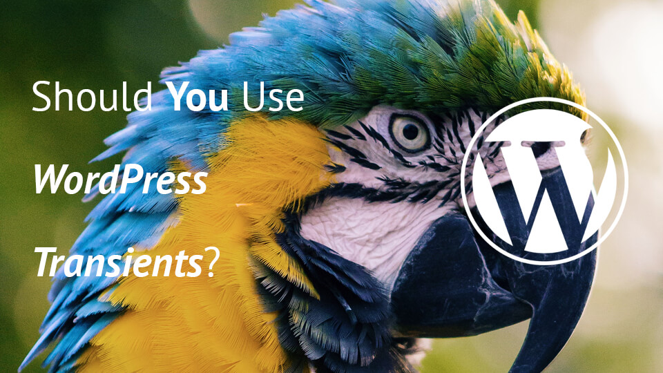 Parrot with Article Text